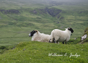 backpack, dornie, eileen donan, faerie, fairy, fairy glen, highland, isle, meadow, mull, pasture, ru
