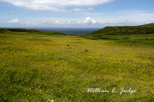 blue, calgary bay, clouds, field, flowers, harbor, isle of mull, meadow, ocean, scotland, scottish,